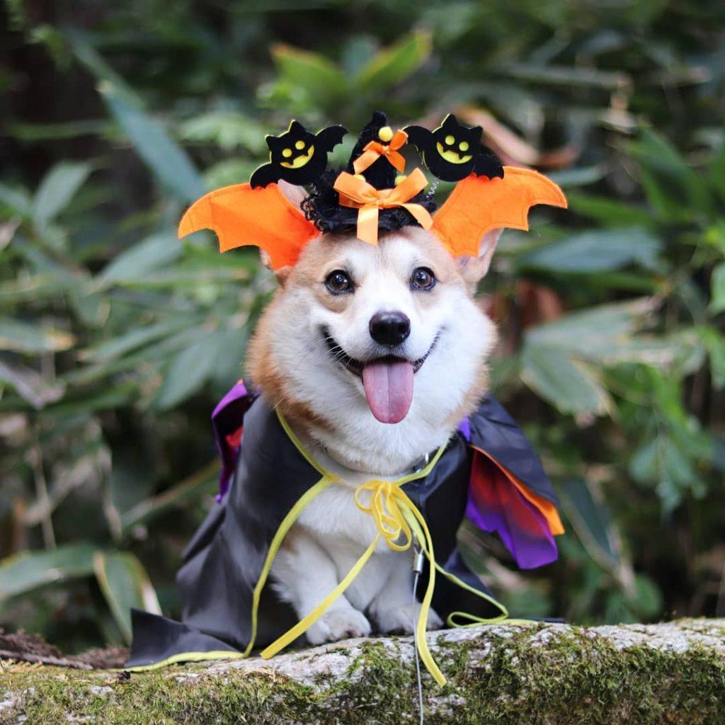 Gen Halloween