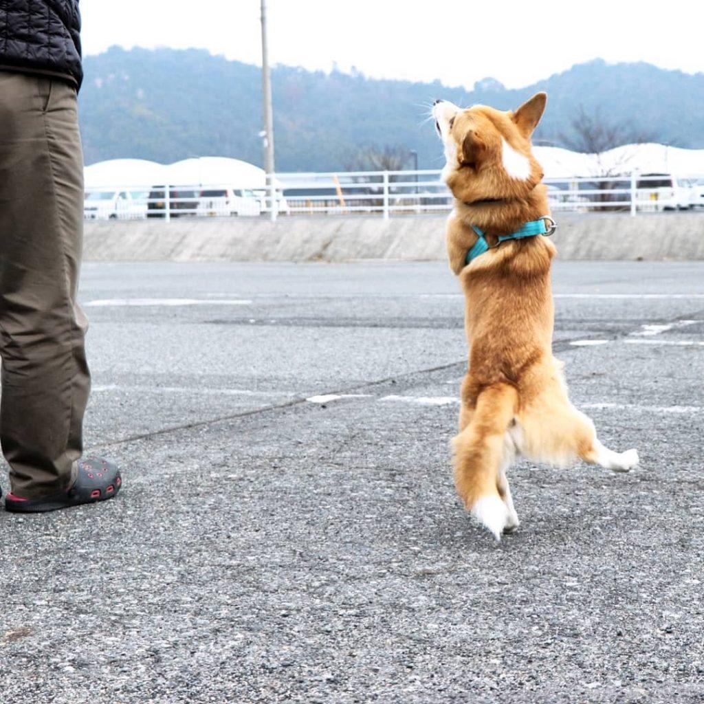 Gen bailando caras perrito