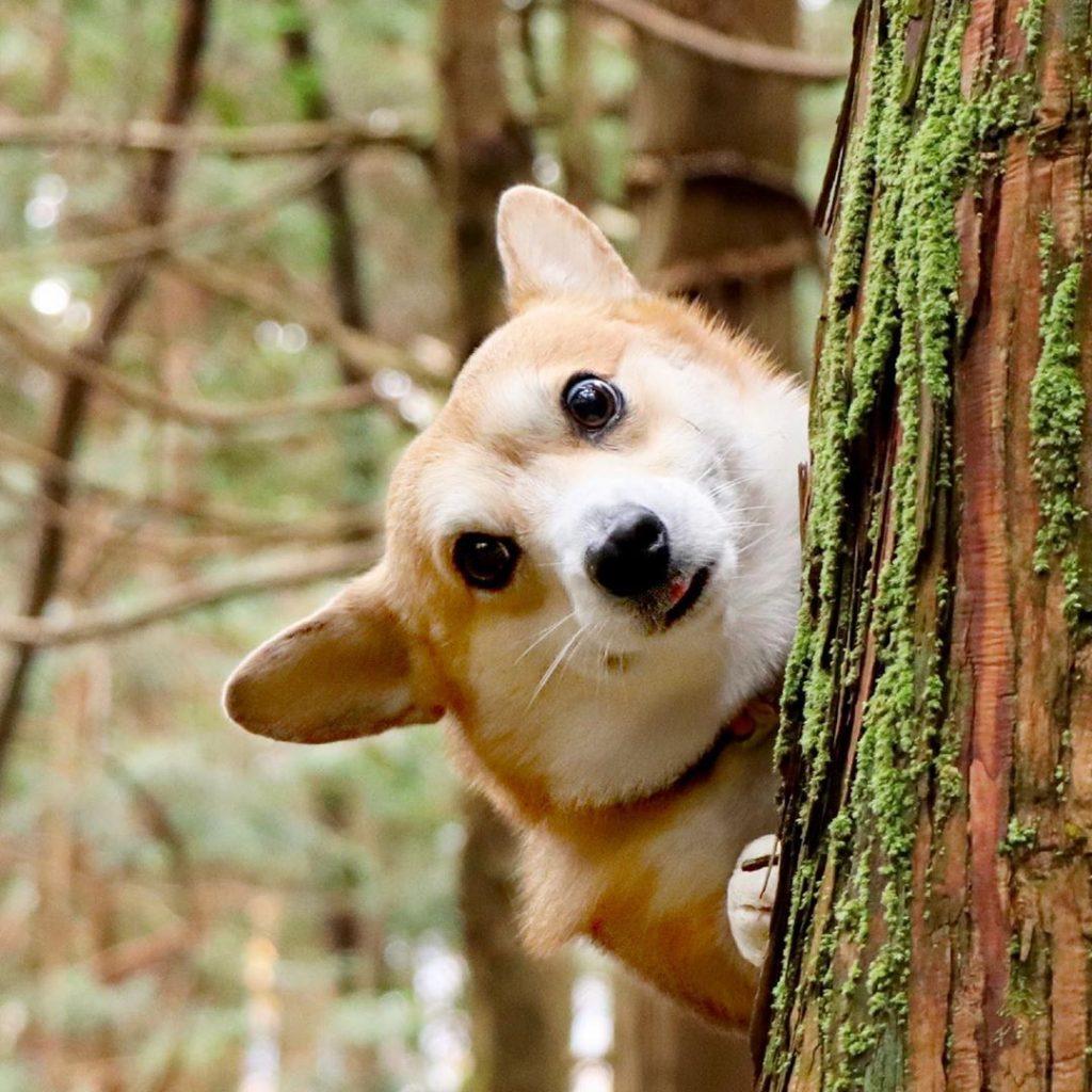 Gen bosque