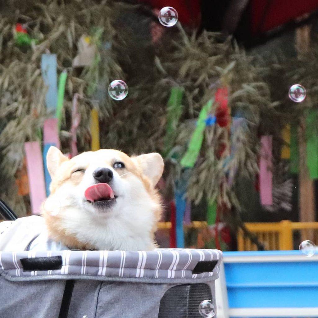 Gen burbujas