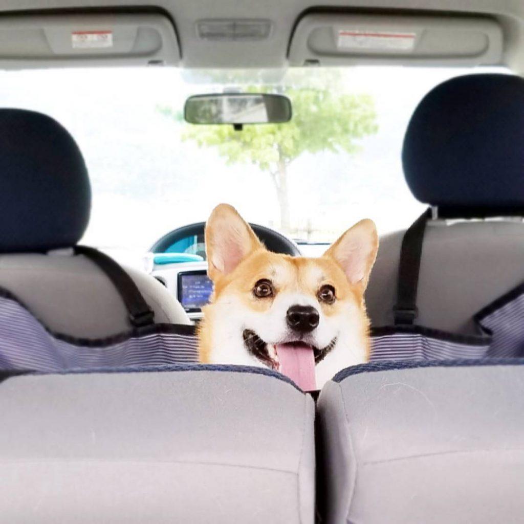Gen coche caras perrito