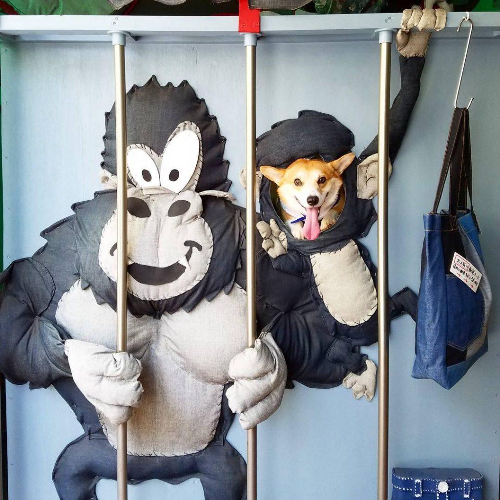 Gen mono caras perrito