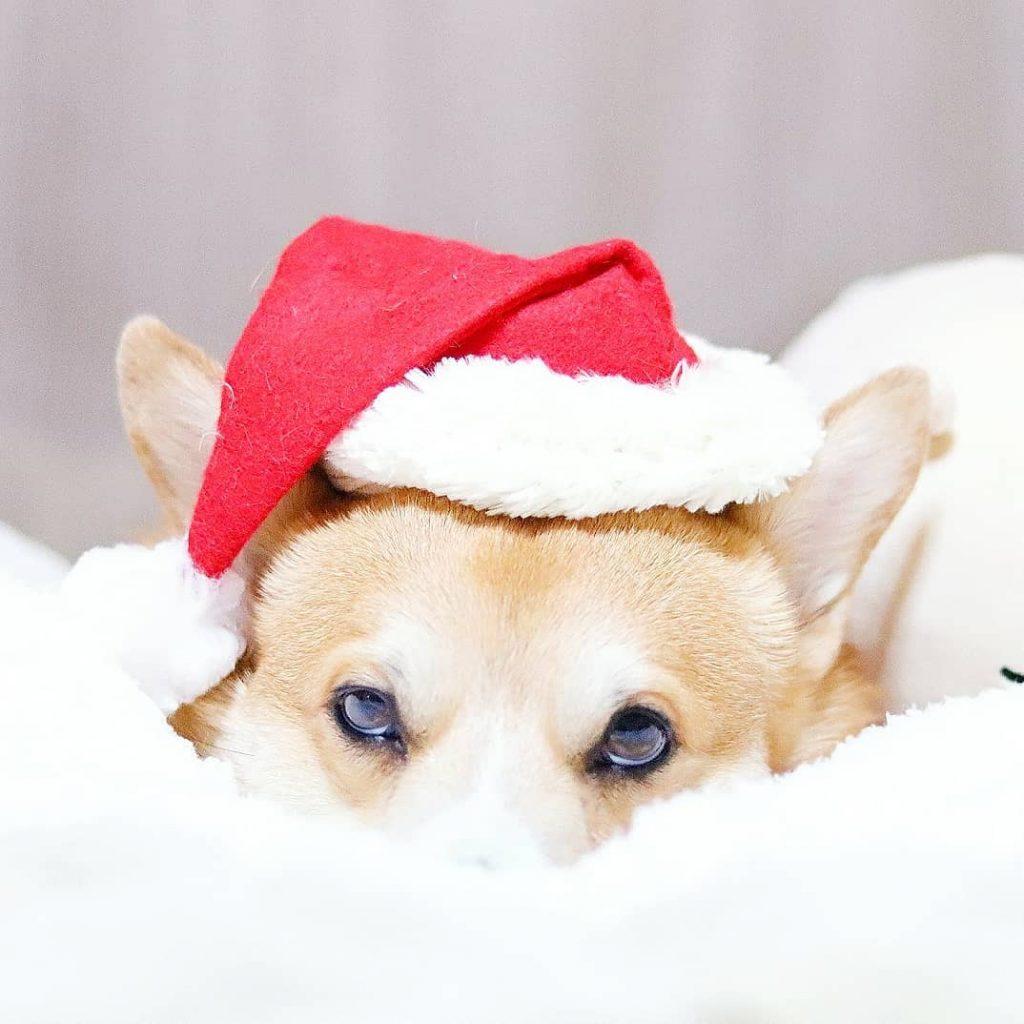 Gen navidad caras perrito