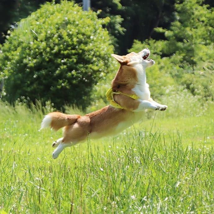 Gen saltando caras perrito