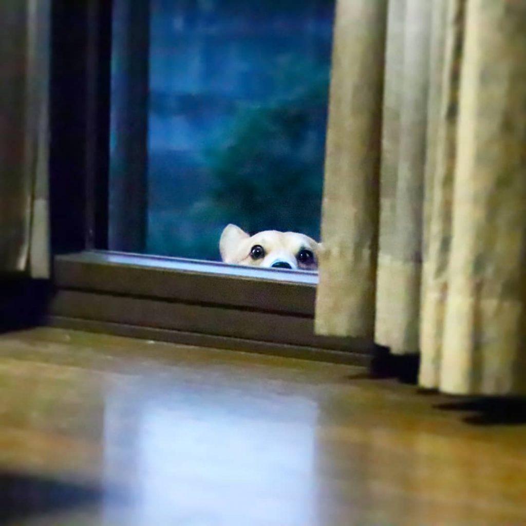 Gen ventana caras perrito