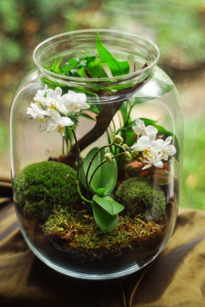 Maravilla terrario flores blancas