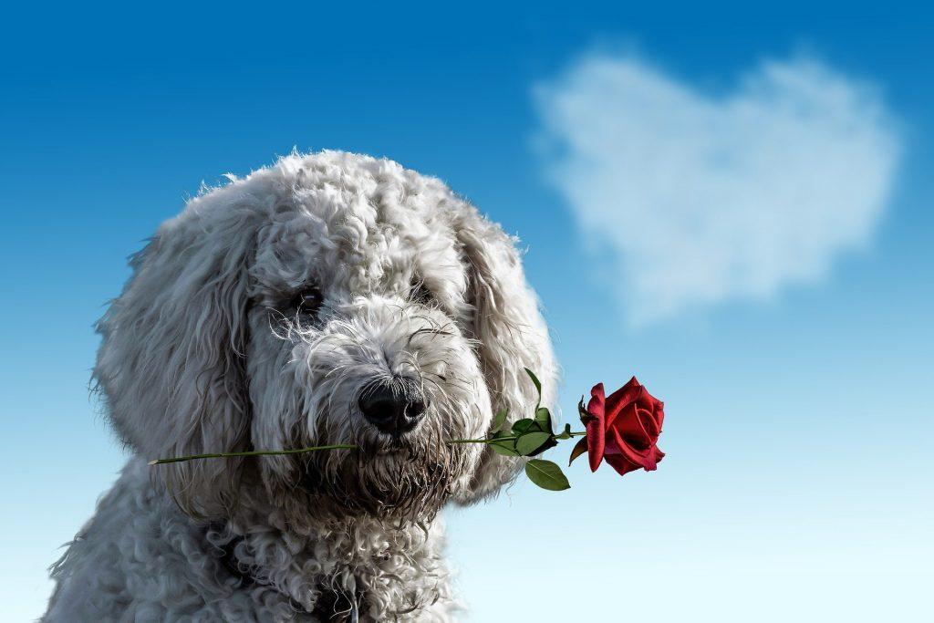 Perro flor perdon