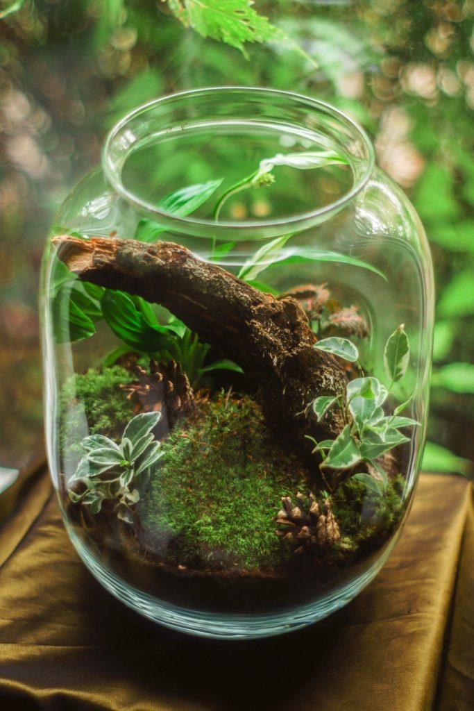 Terrario cristal musgo tronco