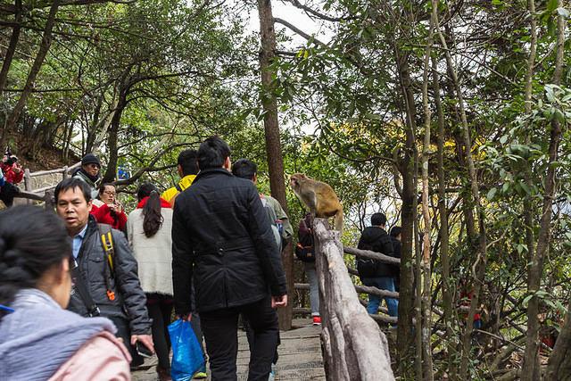 mono visitantes parque turistas