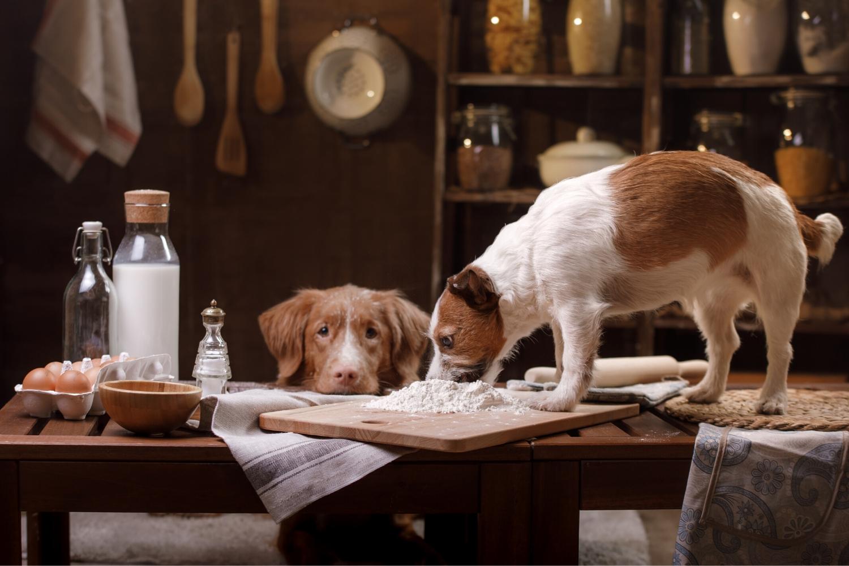 perros en la cocina