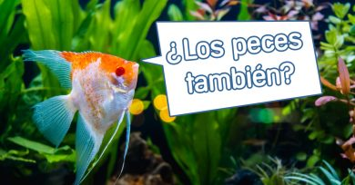 peces-orinar