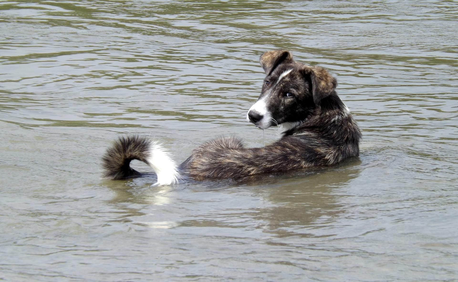 perro baño agua