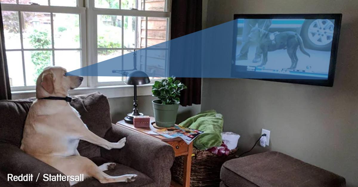 perro-ver-tv