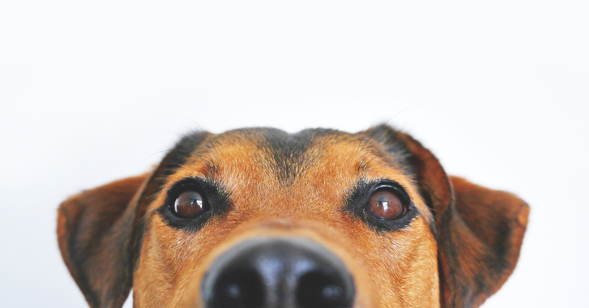 perro ojos