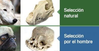 seleccion-hombre-vs-natural