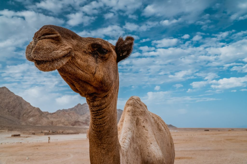 Camello mentiras refutadas