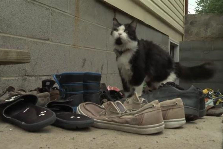gato zapatos