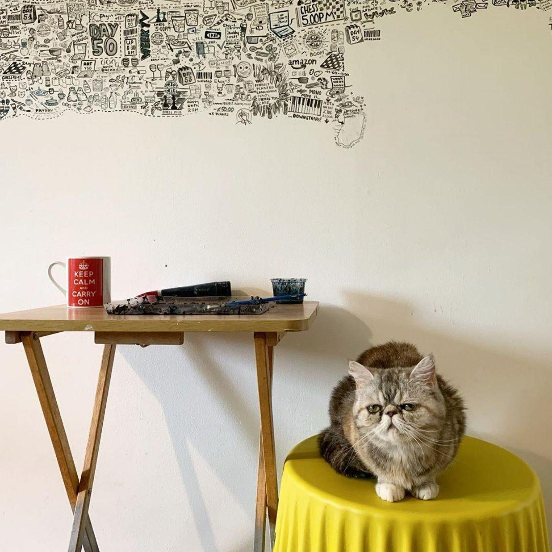 gato pared