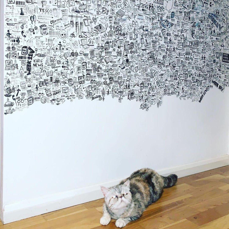 gato dibujos