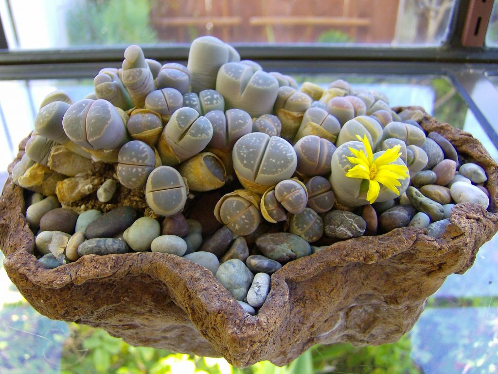 Macetero planta piedras