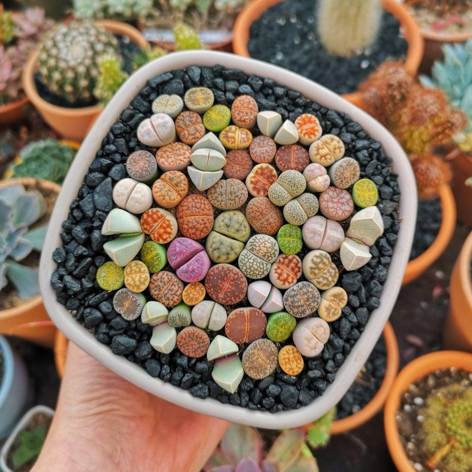 Macetero plantas