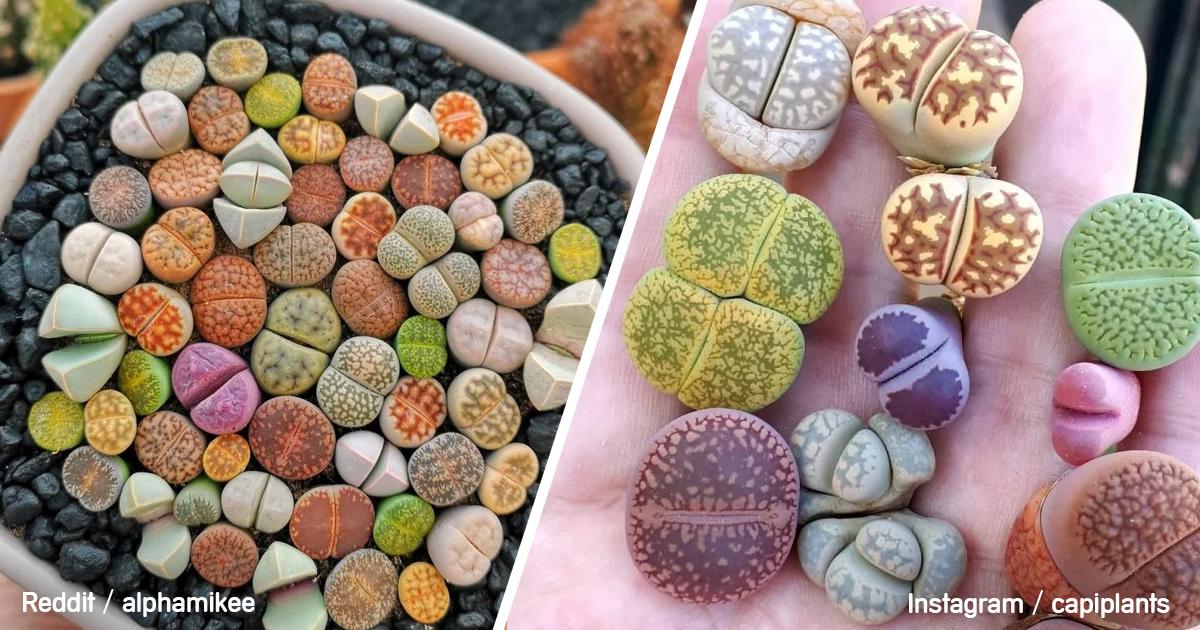 planta-piedra