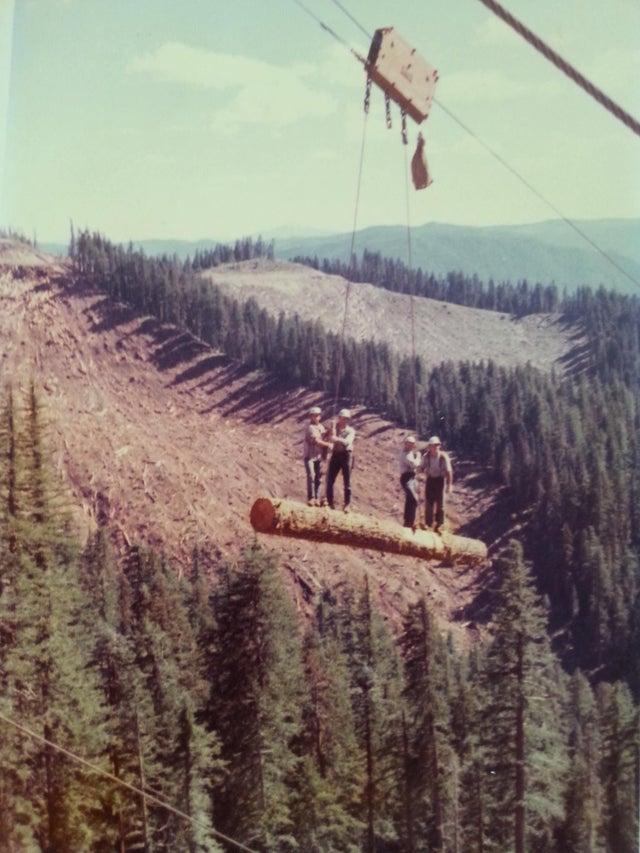 hombres sobre tronco