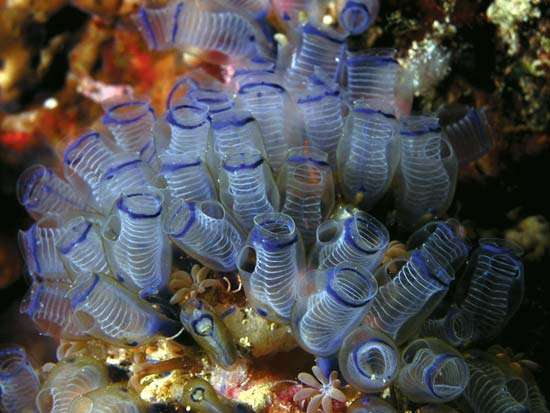 grupo de chorros marinos