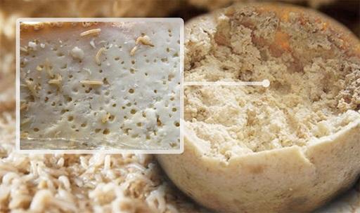 queso Casu Marzu