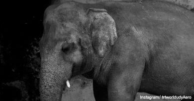 elefante-solitario-libre