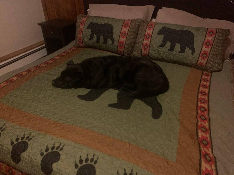 perro durmiendo en cama