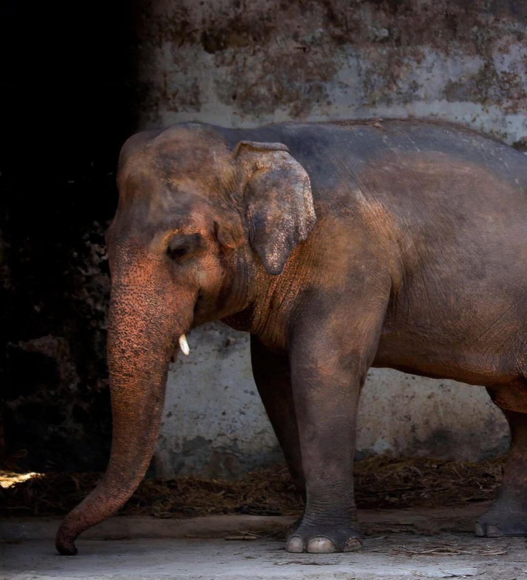 elefante encerrado