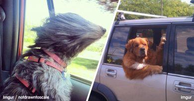 mascotas viajando