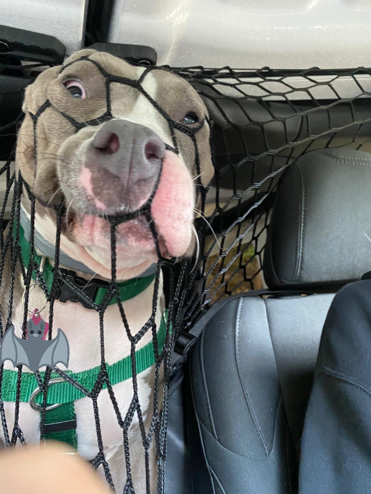 perro pillado con red de coche
