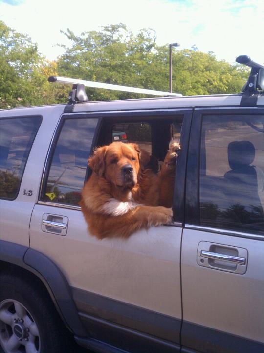 perro asomado por la ventana del coche