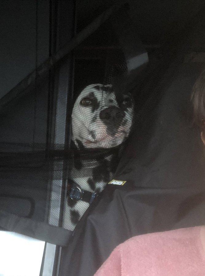 perro deseando llegar a casa