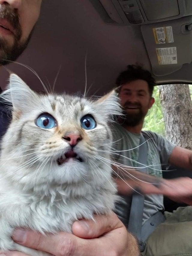 gato asustado en el coche