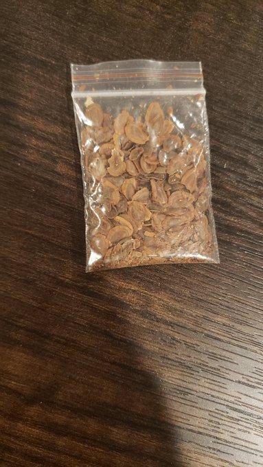 bolsa de semillas