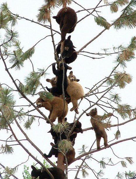 oseznos en el árbol