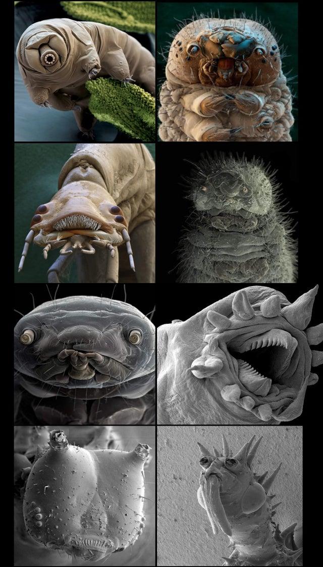criaturas microscópicas