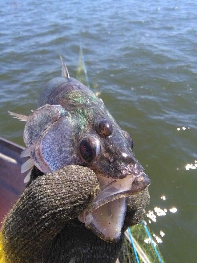 pez con 3 ojos