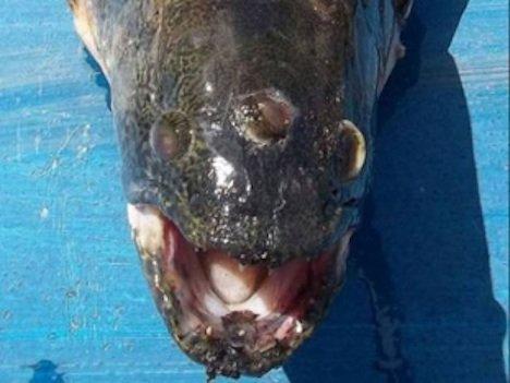 pez de 3 ojos