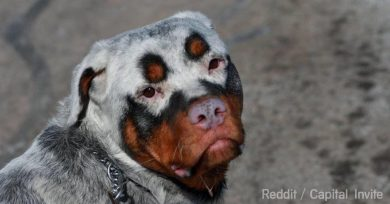 animales-vitiligo