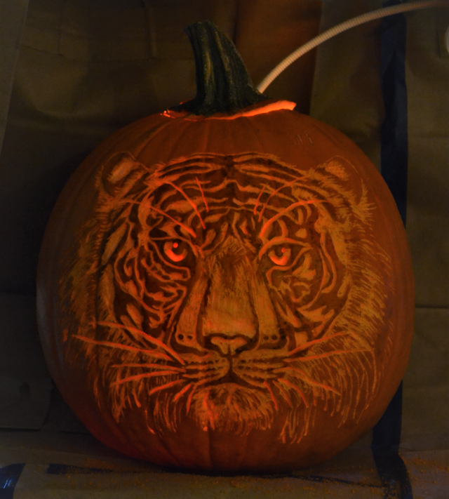 calabaza tigre