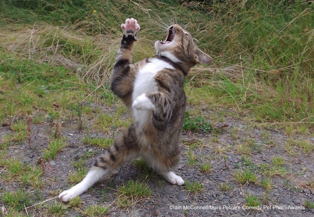 gato cantando
