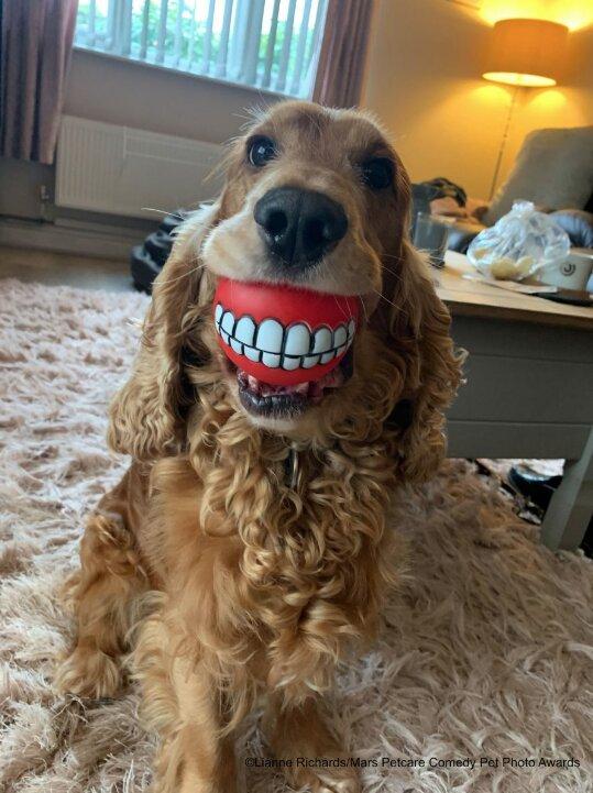 perro con pelota de dientes
