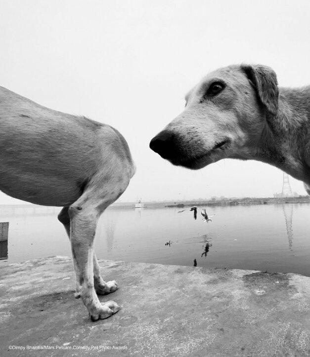 perro sin cabeza