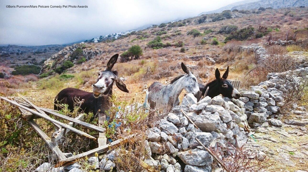 burros pasando la tarde