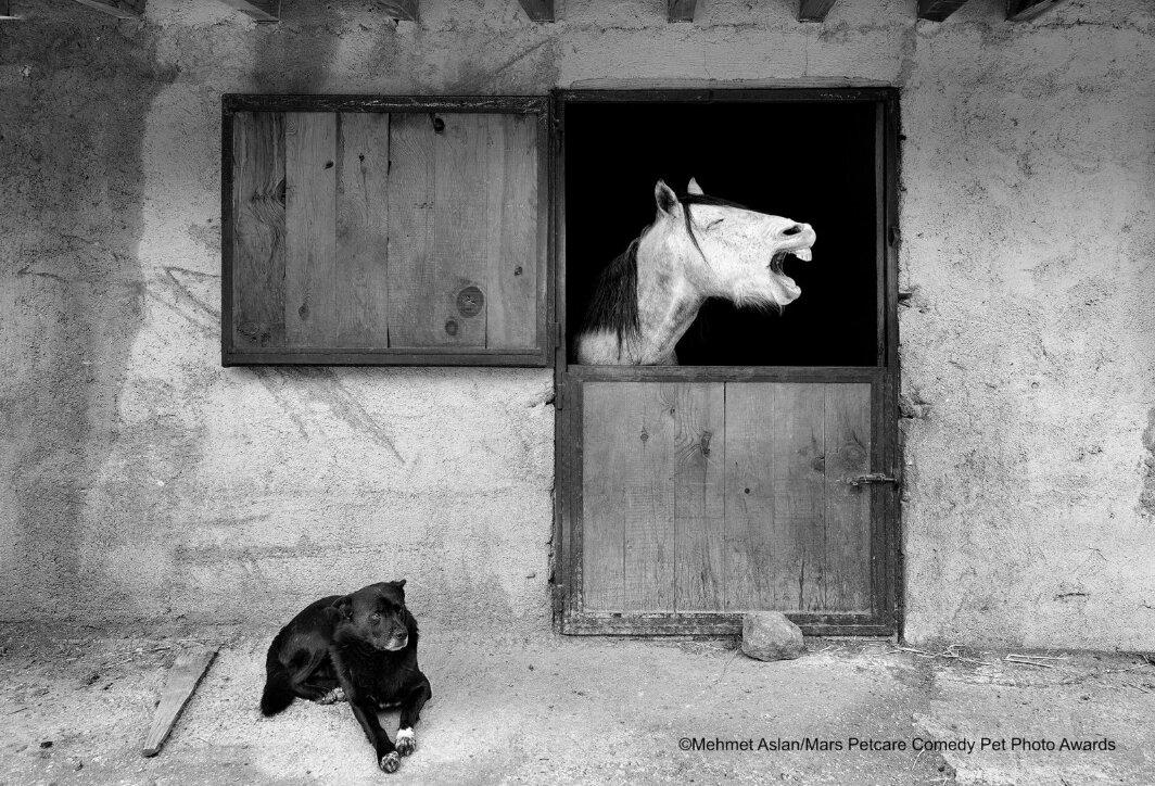 caballo riéndose con perro