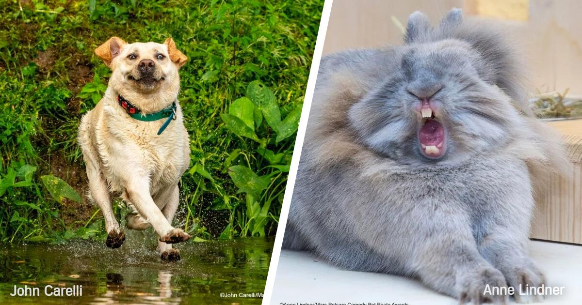 fotografia animales divertidos